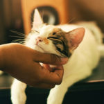a cat being pet by someone