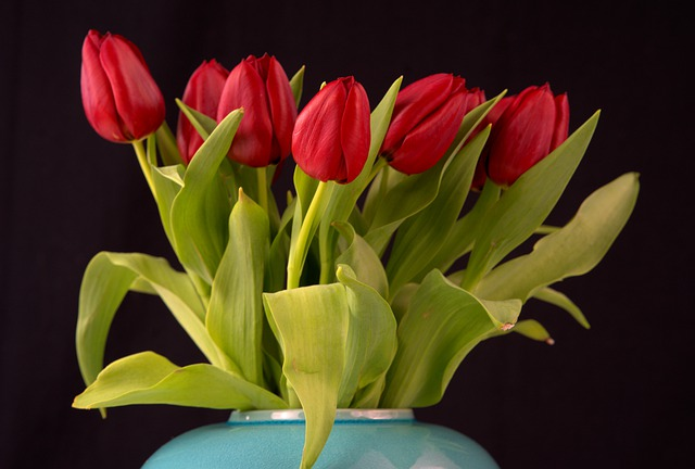 red tulips in the blue vase