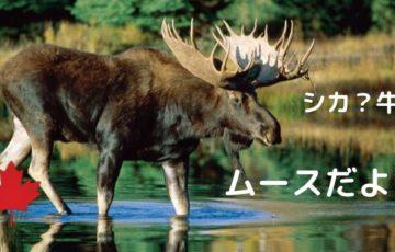 ムース水の中