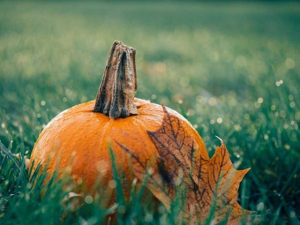Halloween pumpkin with a leaf